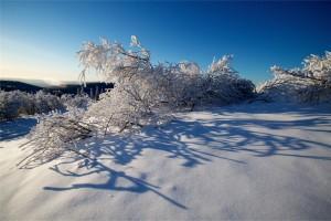 Fairbanks Winter